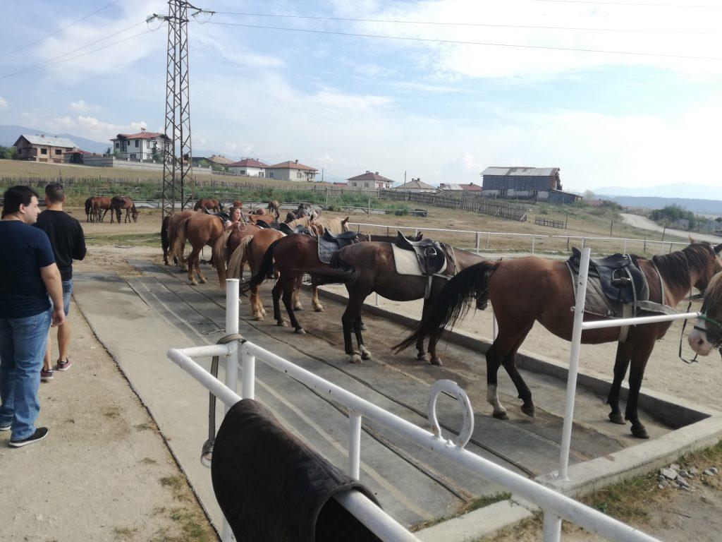 Срещата с конете е вълнуваща.
